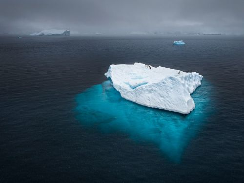 Penguins adrift on an iceberg during a heavy snowstorm in Antarctica. (via National Geographic)