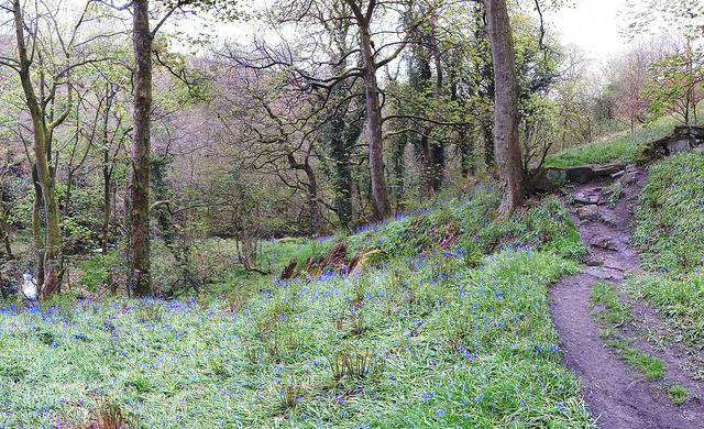 colden valley: blue flowers, may on Flickr.
