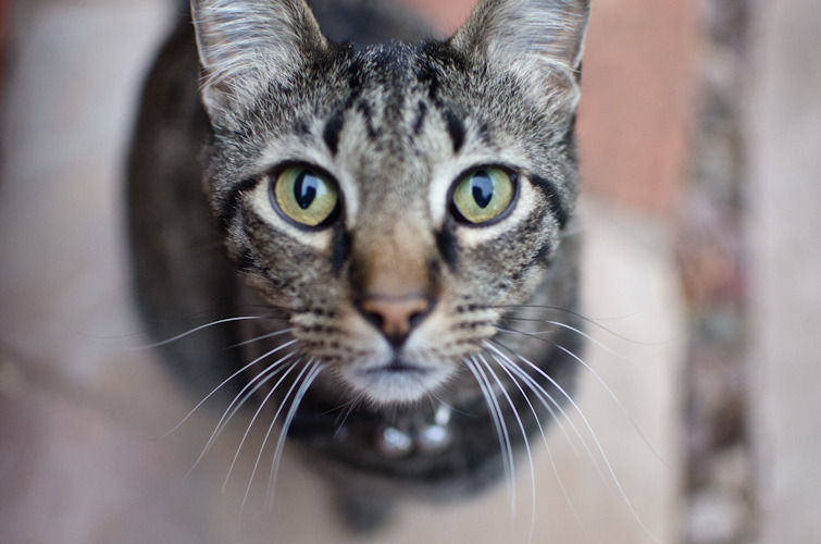photogenicfelines:  (s d)