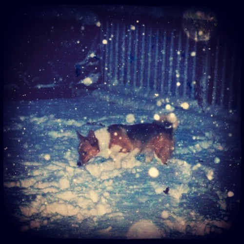 Someone loves the snow!! :)