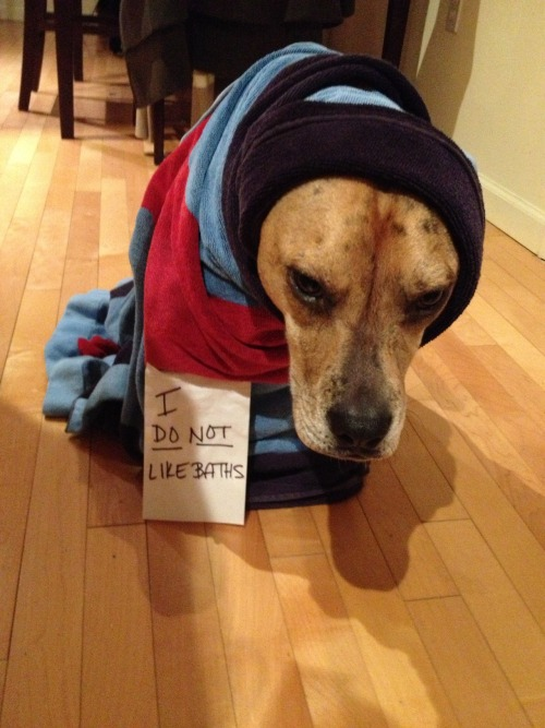 dogshaming:  I DO NOT like baths.