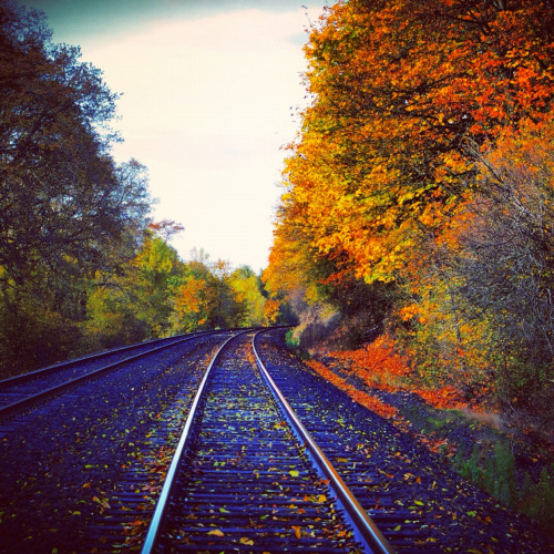 relaxed-mind:  Train tracks
