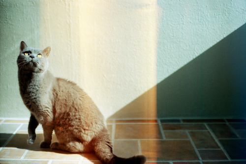 michellefader:  MF  lovely photo of a lovely feline!