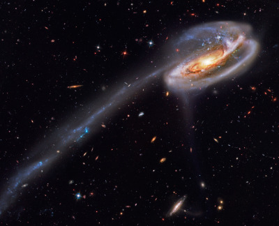 n-a-s-a:  Arp 188 and the Tadpole's Tail  Image Credit: Hubble Legacy Archive, ESA, NASA
