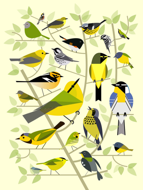 modosaurus:  new world warblers (by jeva jeva)