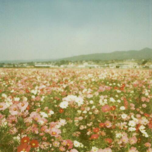 field of flowers on Tumblr  Flower Fields Tumblr