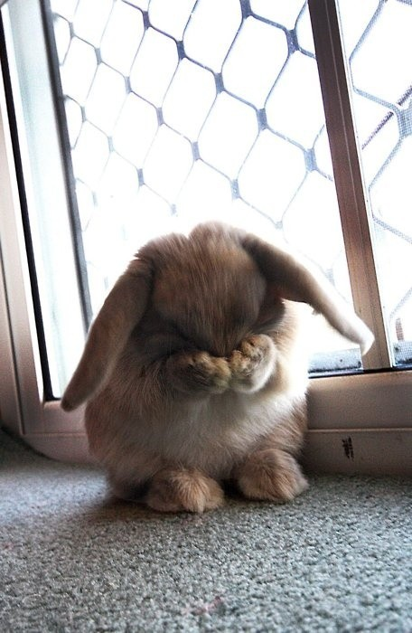 blissfulbambi:  morninqs:  so cute!  rabbits are so cute