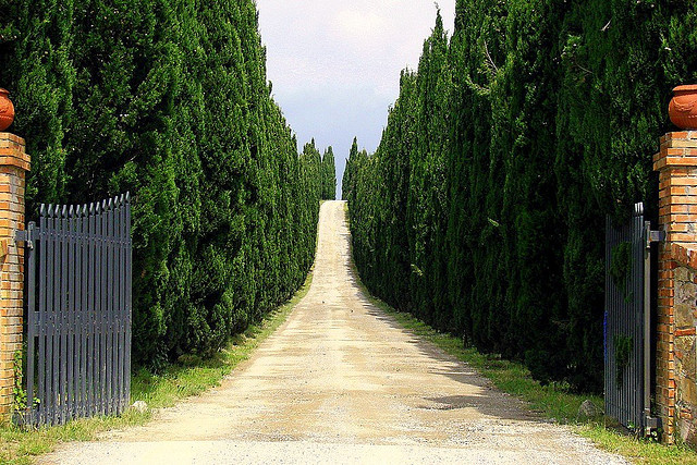 | ♕ |  Il Castagno - Tuscan winery estates  | by © Mathias Liebing | via ysvoice
