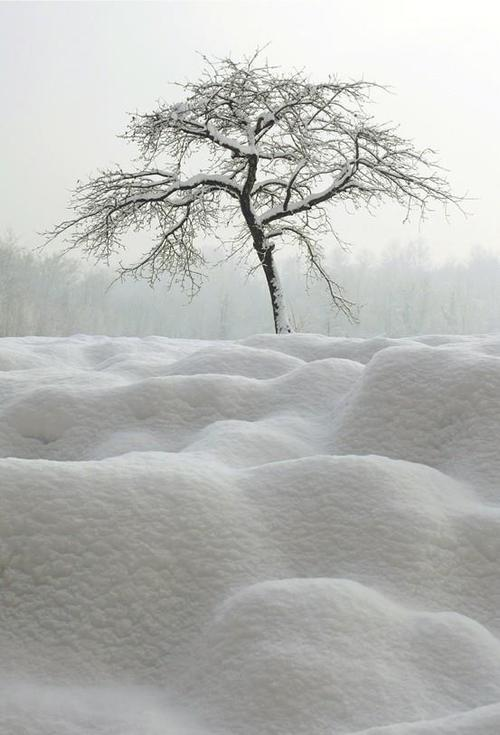 amplexi:  Tree and snow