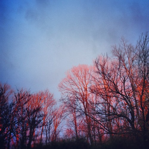 The lighting from the #sunset this evening was amazing! These trees are on fire.