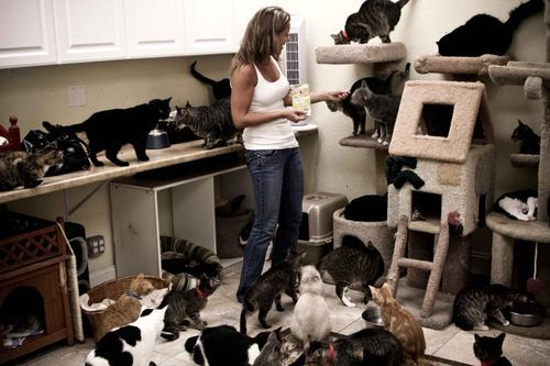 felinefaytale:  Cat Lady: Advanced Level. We're off to the shelter today. See ya' later!  Happy Caturday y'all!!