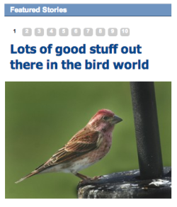 ckolderup:  Local newspapers. Still got it.  This is Chirp Derpington with your daily Nature News. Everything's pretty fabulous out here in Bird World. The worms are fatter than they were last week, Betty Birdy's feathers are looking awfully sexy lately, and now that the wind has died down, our birdy acrobatics are substantially easier.
