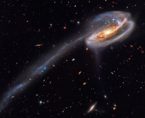 La galaxia Tadpole thescienceofreality:  Arp 188 and the Tadpole's Tail  Image Credit: Hubble Legacy Archive, ESA, NASA; Processing - Bill Snyder (Heavens Mirror Observatory)