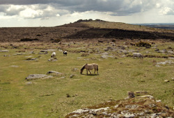 Valley of the Dartmoor Ponies.