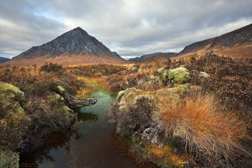 absolutescotland:  Buchaille Etive Mor by Annette Dahl on Flickr.  Glencoe: The 'vale of weeping' - I could weep for such colours.