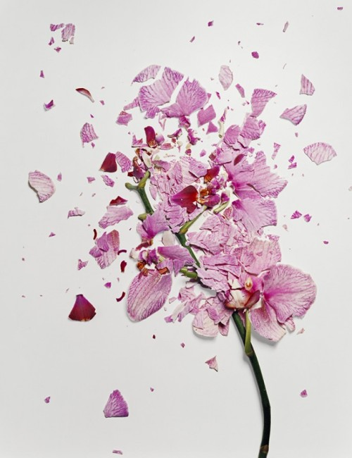 Flowers soaked in liquid nitrogen and shattered. Breathtakingly beautiful.