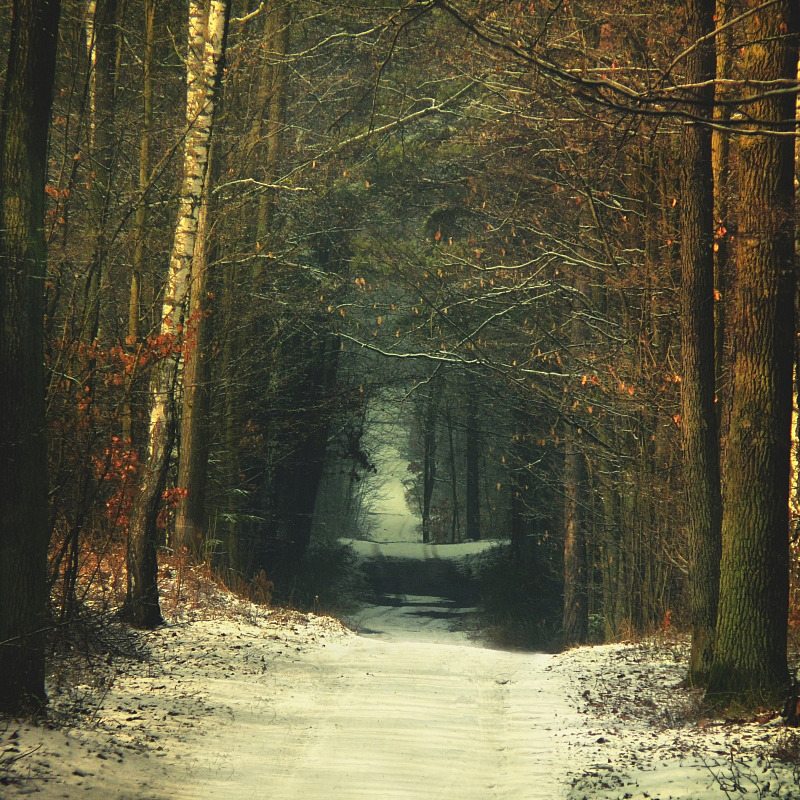darkface:  November Forest by ~Justine1985  This is basically my street