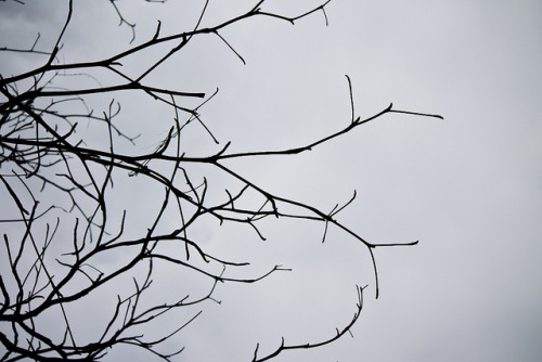 Melancholic tree on Flickr.