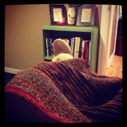 Alpacan throw I knitted four years ago in Petaluma. I hope I have it forever. (at Heidi's Room Of Her Own)