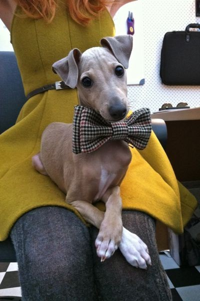 yoursecretary:  lemoncranes:  (via hound)  heartthrob!