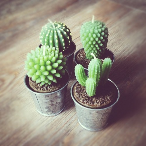 Seriously, how cute ! #candles #cactus 🌵🔥