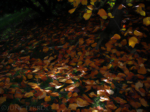 self-xpression:   AUTUMN LEAVES  X copyright ©JUNE FERROL  All Rights Reserved _______________________________ _______________________________ _______________________________ Falling leaves hide the path so quietly - John Bailey