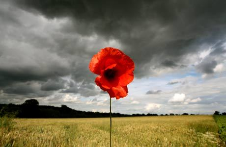 'In Flanders fields the poppies blow / Between the crosses, row on row … 'Photograph: Graham Turner / Guardian
