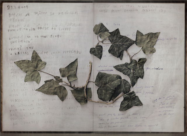 poete:  Ivy from Egon and Edith Schiele's grave