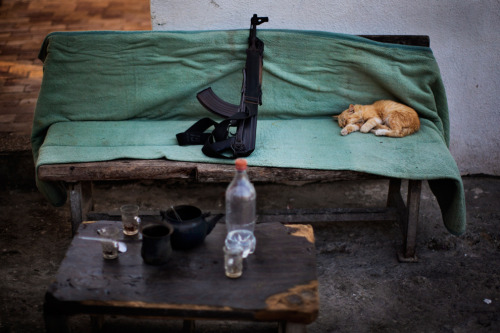 by Bernat Armangue A cat sleeps near a Kalashnikov weapon at a Hamas security check point in Gaza City, Oct. 30, 2012. (AP)