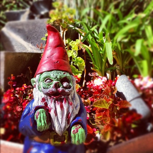 11:11am 11.9.12: #1111countdown. Setting up Zombie Garden Gnome wedding present from @gopherguts and @blakesinclair 💜