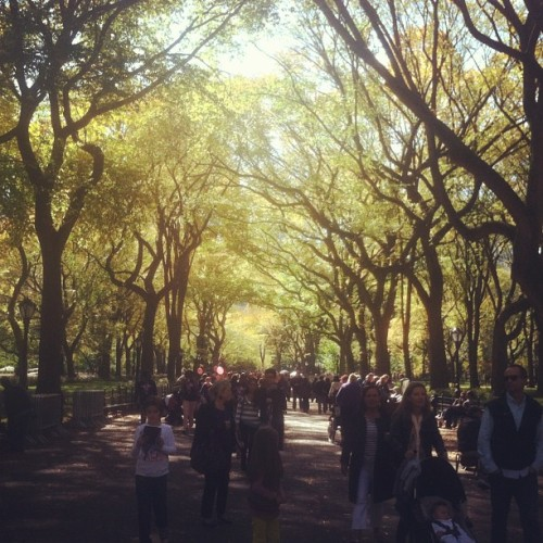 Beautiful day in Central Park!