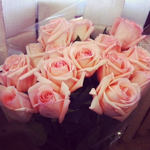 hope-and-loyalty:  r-os-yy:  ✿ more rosy here ✿  rosy blog, following back similar ♡