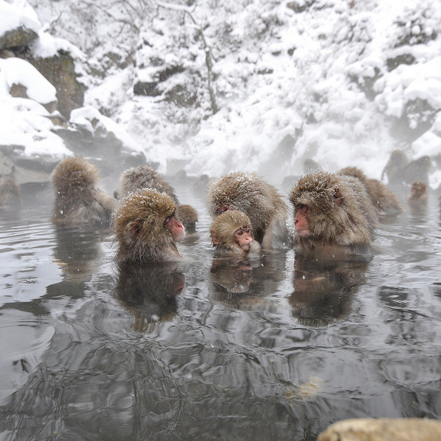 Snow Monkey Family on Flickr.  © Ogawasan 小川/Bach.sacha.Photography.