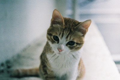 left-nut:  Cat by TAKAHIKO on Flickr.
