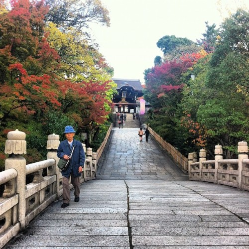 #Fall #colours #kyoto