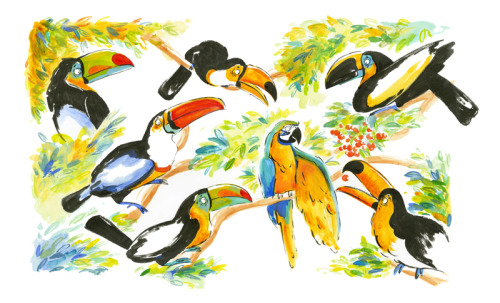 stephanieayres:  Jealous toucans