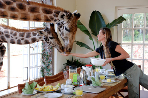 lunuh:  just a giraffe in the kitchen. the usual