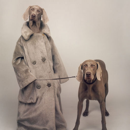 William Wegman. Cute