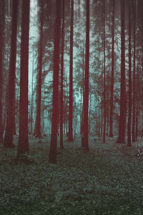 theviewofus:  Forest