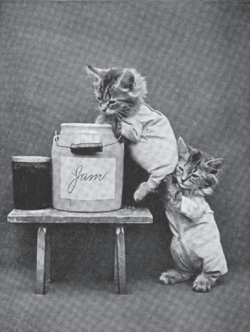 jhnval:  Louis Wain and Harry Whittier Frees Cat Pictures
