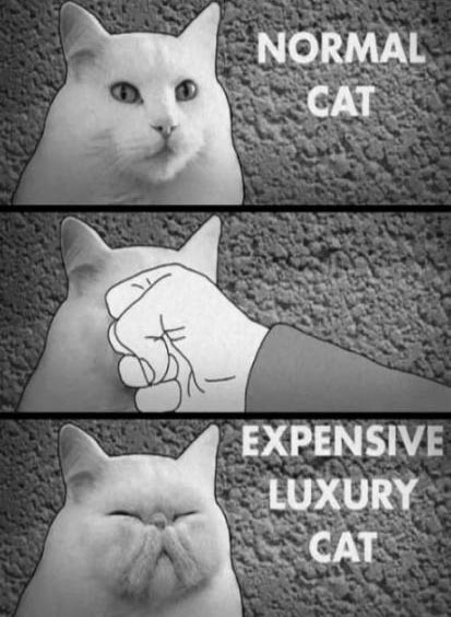 wa-chubble-is-dis:  How to make a luxury cat