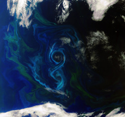 "rhamphotheca:  Stunning View of a Phytoplankton Bloom From Space by Phil Plait This shot of a bloom in the southern Atlantic Ocean was taken by the ESA's Envirosat, which — duh — is designed to observe our environment. In this case, scientists keep a keen eye on phytoplankton blooms: while this bloom is breathtaking and gorgeous, many can be hazardous. Besides producing toxins that can harm sea life, they can also consume more oxygen in the water than usual, which is obviously tough on any life in the area. The color of the bloom can be found quickly using satellite imagery like this, and the algae species determined. Also, phytoplankton are sensitive to some climate changes, so observing them can act as a ""canary in the coal mine"" for climate change. Sometimes, the best view of the Earth around us is from above. And sometimes that view is amazing, but a reminder that our ecosystem is a dynamic balance… and it's best that we understand all the forces that can upset that equilibrium. (via: Bad Astronomy - Discover Magazine)               (image: ESA)"