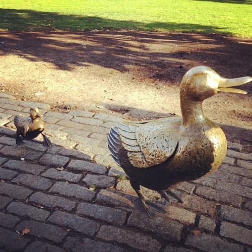 Make way for duckling. #boston #fall #park  (at Boston Public Garden)