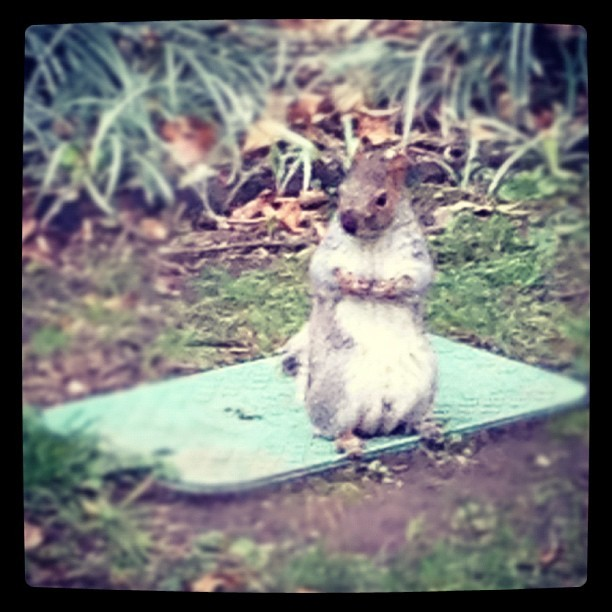 Apparently, even squirrels get cameltoe.