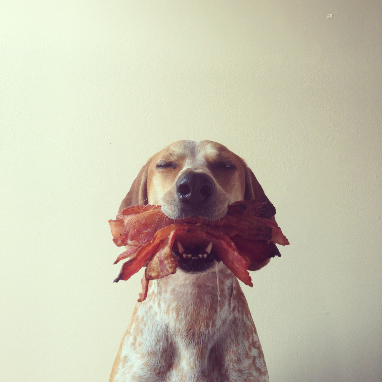 maddieonthings:  Bacon