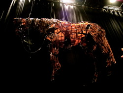 Joey!!!  War Horse, at Lincoln Center, NYC November 10, 2012