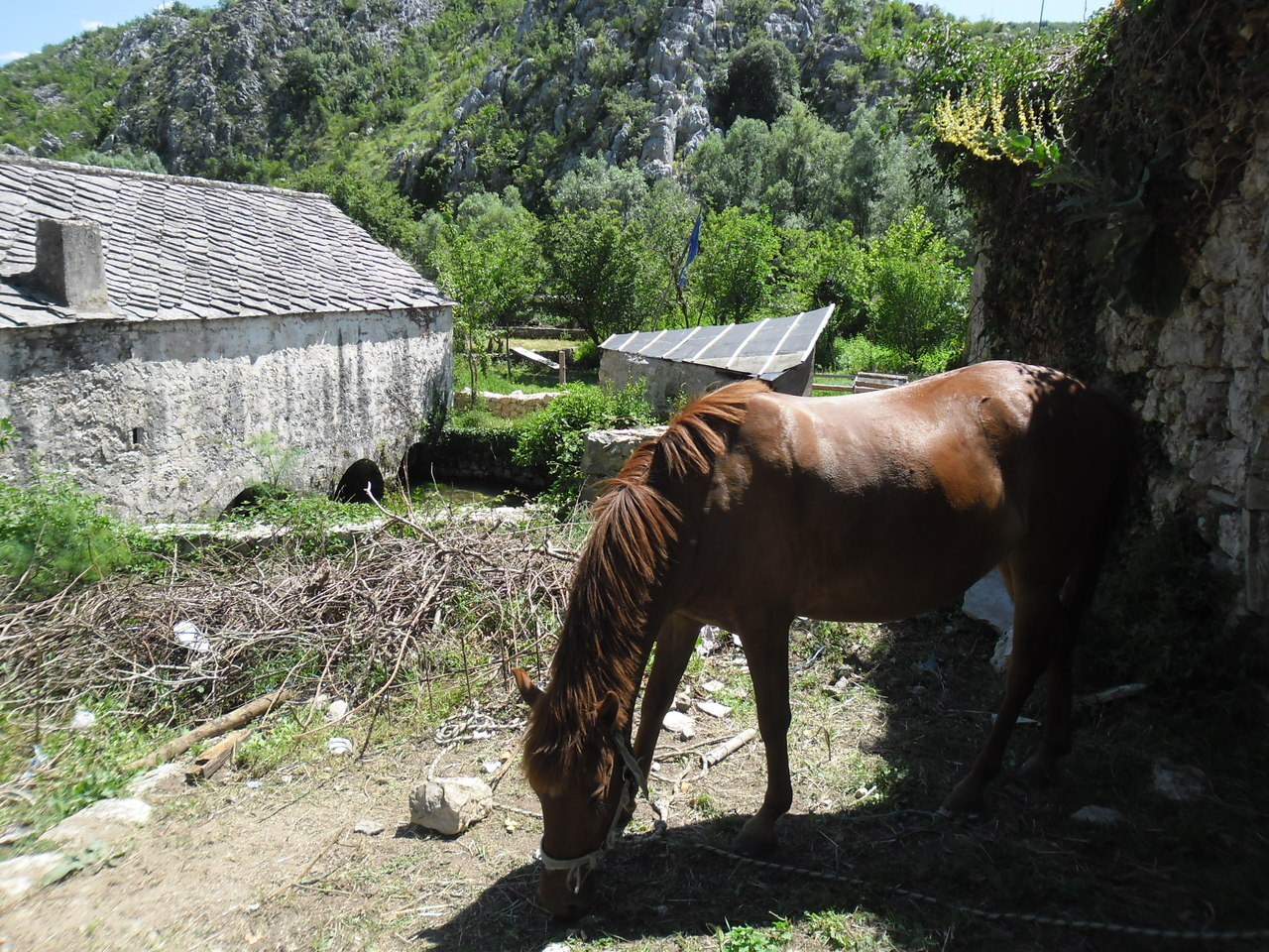 A horse I found hanging out in Blagaj, Herzegovina…
