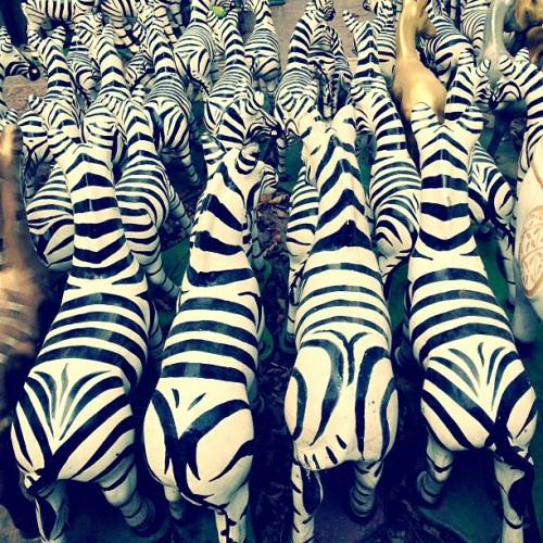 Hey hey zebra butts #bangkok #animals