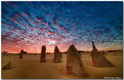 landscapelifescape:  The Pinnacles Desert, Western Australia (by Steve Daggar)