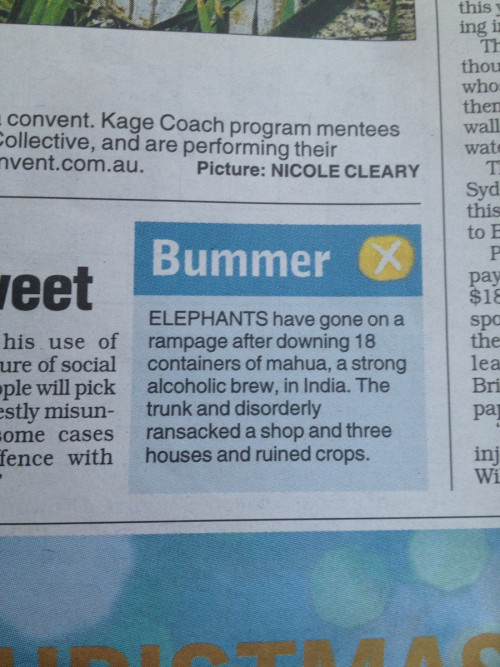 Go home elephant, you're drunk.